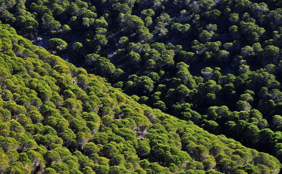 Mijas Mijas Ángel Nozal continuará con la reforestación de la sierra de Mijas