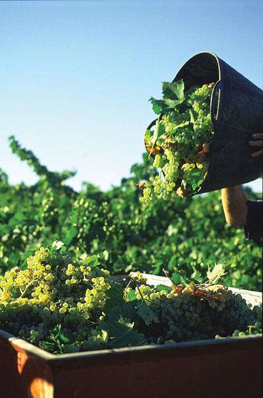 Malaga Malaga 'Sabor a Málaga' volverá a galardonar los mejores vinos de la provincia en su VII Premio de Vinos con Denominación de Origen 'Málaga' y 'Sierras de Málaga'