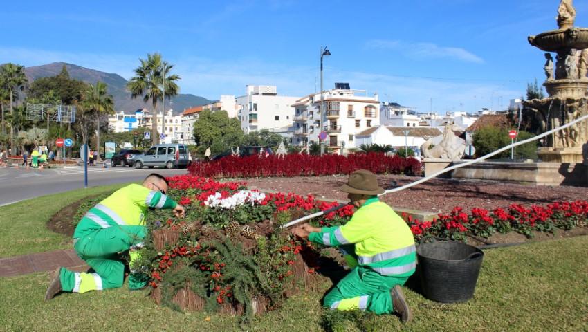 Estepona Estepona El Ayuntamiento de Estepona plantará 20.000 pascueros y cyclamens para embellecer zonas verdes durante la Navidad