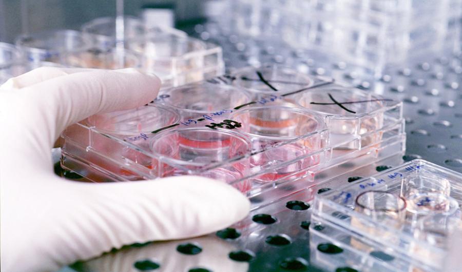 Actualidad Actualidad Andalucía financia nueve estudios de investigación para afinar el pronóstico y tratamiento del Covid-19