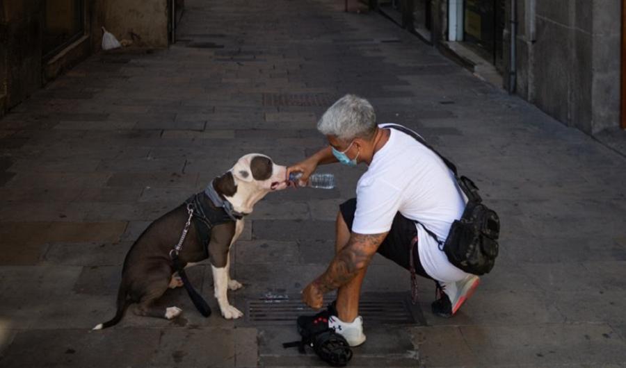 Actualidad Actualidad Andalucía tendrá una nueva ley de Bienestar Animal