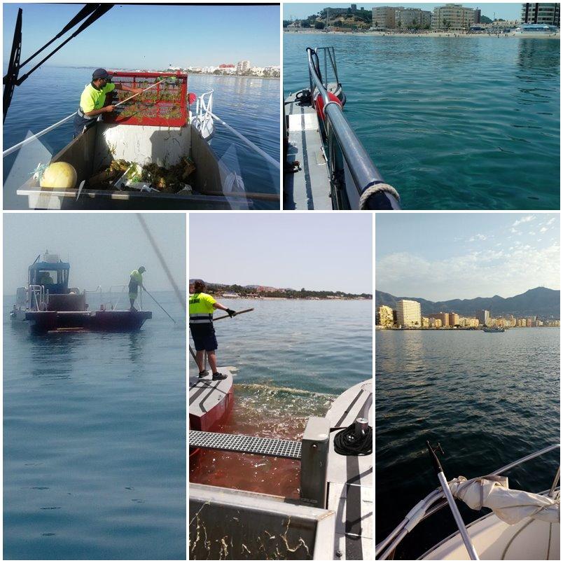 Actualidad Actualidad Sin avistamiento de medusas en las zonas cercanas al litoral de la Costa del Sol Occidental
