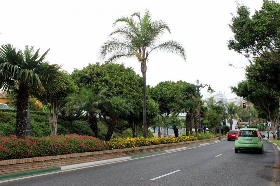 Estepona Estepona El Ayuntamiento de Estepona inicia la plantación de más de 200 palmeras  en las céntricas avenidas El Carmen y Juan Carlos I