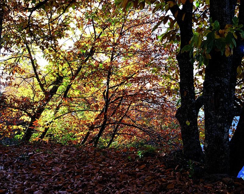Actualidad Actualidad La Diputación incrementará la promoción del Bosque de Cobre con la señalización de 19 senderos