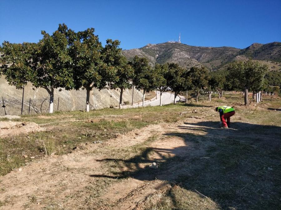 Fuengirola Fuengirola Zonas Verdes de Fuengirola termina el trasplante de los árboles de las calles Valladolid, Mahón y Formentera a su nueva ubicación