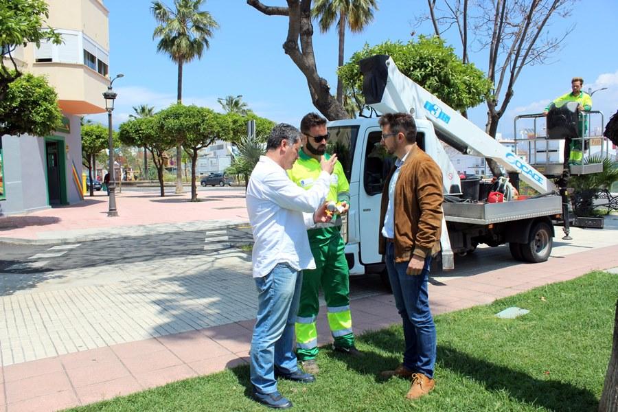 Estepona Estepona El Ayuntamiento de Estepona pone en marcha un plan preventivo para combatir plagas en más de un millar de árboles